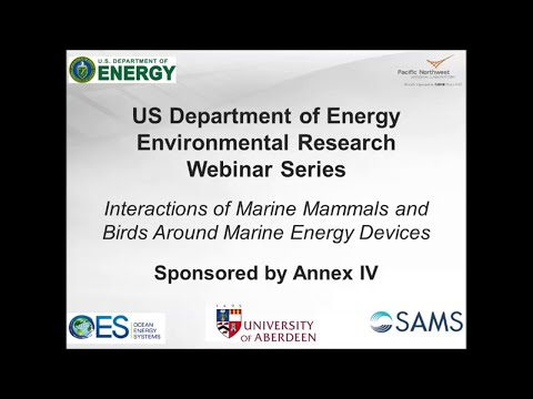Annex IV Webinar #2: Interactions of Marine Mammals and Birds Around Marine Energy Devices