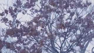 Isaiah Rashad - Heavenly Father [Legendado - BR]