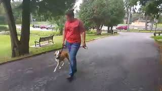 Does your dog freak out when other dogs walk by?