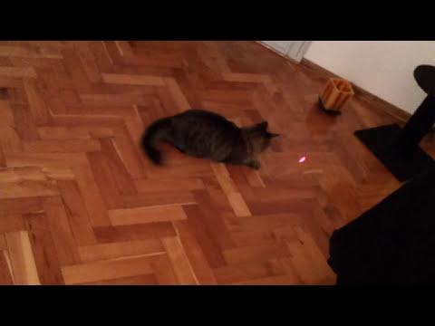 Gato persiguiendo puntero laser