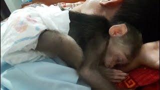 Baby Monkey Doo And Daddy Take A Nap - Funny Animals