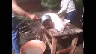 Carnitas estilo Michoacán (Preparación del puerco)