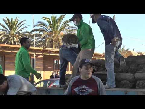 Tamarugal Noticias - Pasto plaza de armas Pozo Almonte