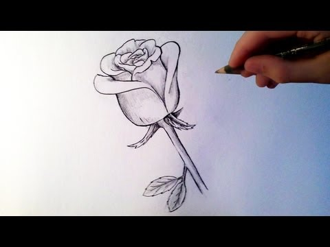 Comment dessiner des roses facile - Dessins de rose ...