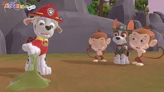 Paw Patrol On A Roll | Save The Stinky Monkeys | Episode 15 | Patrulha Pata | ZigZag Kids HD