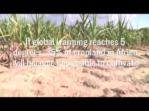 RAN Fast Facts: African Croplands