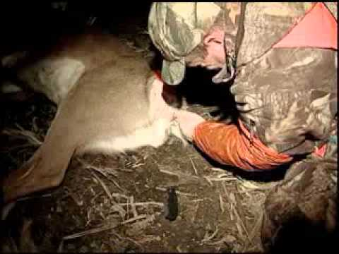 Field dressing a deer with the Butt Out   Hunters Specialties
