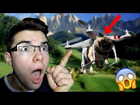 IL FAIT VOLER SON CHIEN AVEC UN DRONE !! (Vidéo réaction, compilation, Prank)