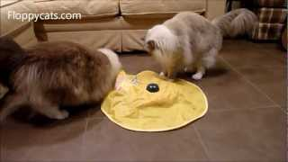 Ragdoll Cats Attack The Undercover Mouse or The Cat's Meow Interactive Cat Toy - Floppycats
