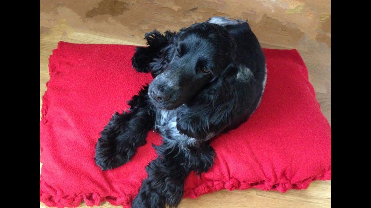 C mo hacer cama para mascotas sin coser youtube for Cama para perros