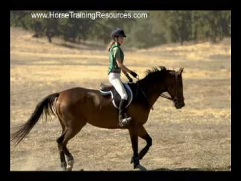 Horse Training Videos – Horse Training Tips