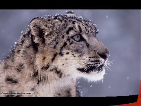 Globe News - Wild life