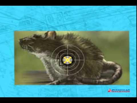 Airgun Academy Episode 21: How to Choose an Air Gun