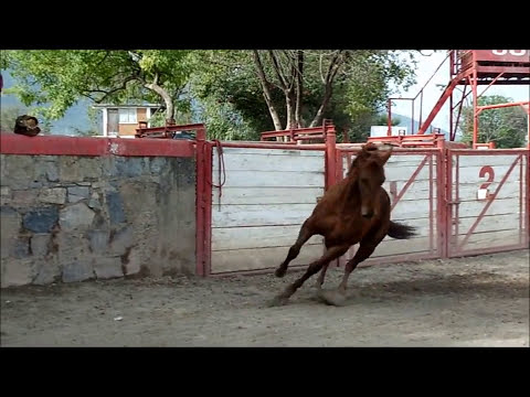 Precioso caballo charro RIENDA COMPLETA DE CALA en venta!!!