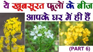 ?? ??????? ????? ?? ??? ???? ?? ??? ?? ??? || Beautiful flower's seeds at your home. PART-6.