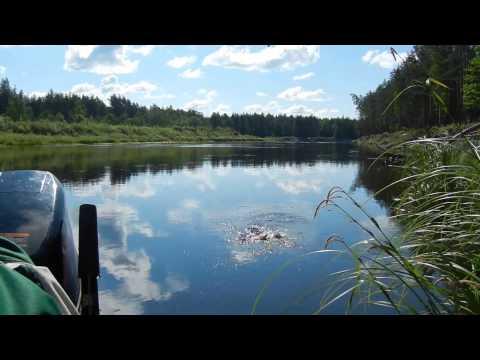 Рыбалка, один день отдыха, ловля щуки спиннингом, плотва удочка на опарыша  ....