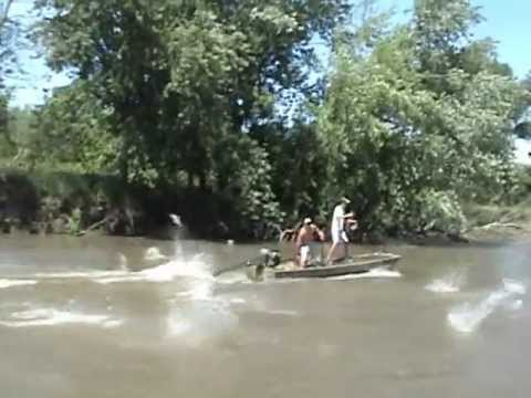 Bowfishing Illinois River Fish Illinois River
