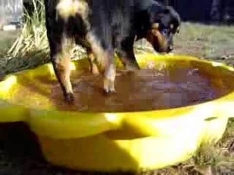 mon chien & l'eau