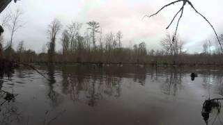 2015/2016 Duck Season in Eastern NC