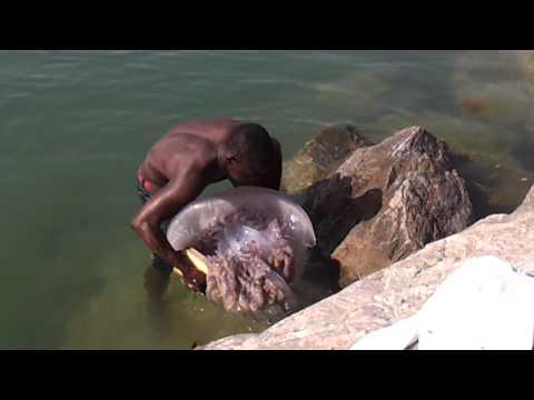 Medusa encontrada en la playa del rodeito en marbella SUPER JELLYFISH
