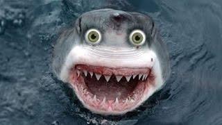 DRUNKEN SHARK!