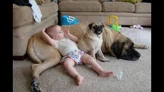 Funny baby with dogs videos,Baby funny with dog,Adorable Babies playing with dogs,