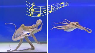 Will an Octopus React to Music - VIEWER REQUEST