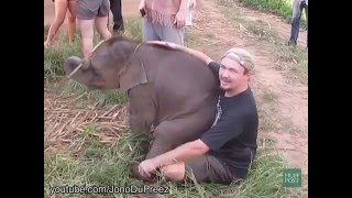 Baby Elephants Who Want To Be Lap Dogs