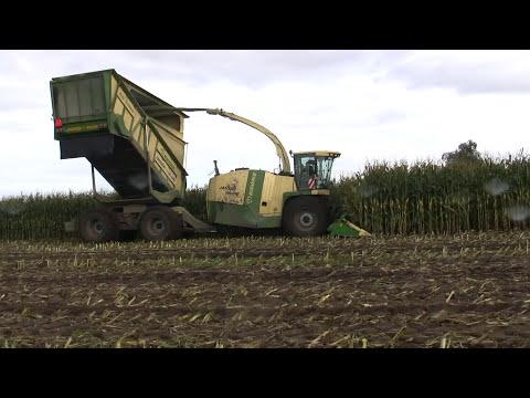 Maishakselen 10-10-2012. Harvesting Maize with a Krone Big X Cargo