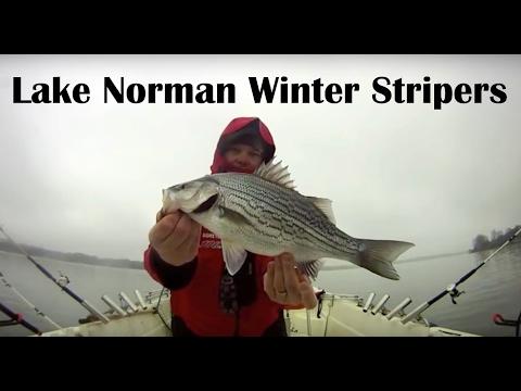 Lake Norman Striper Trolling