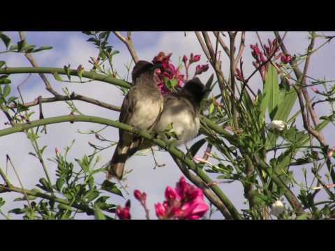Vogelwelt Tansania