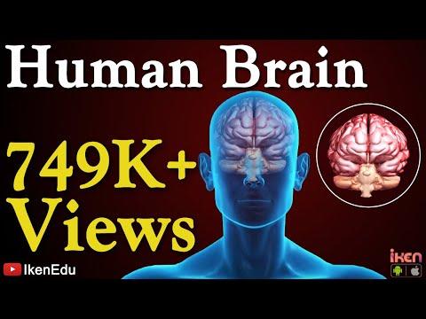 Human Brain Animation | Learn Anatomy Of Human Brain