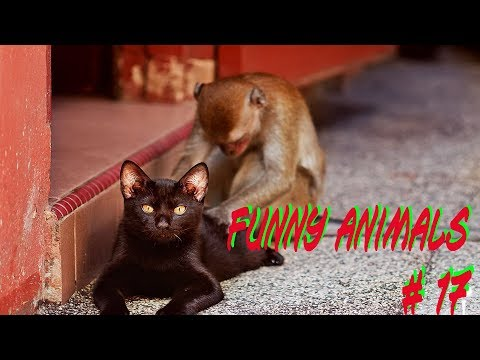 Приколы с животными № 17. Нарезка смешных гифок и видосов. FUNNY ANIMALS