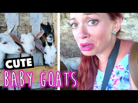 Cutest Baby Goats in the World