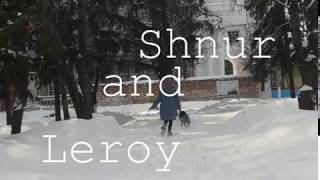 Shnur and Leroy - two lovely dogs