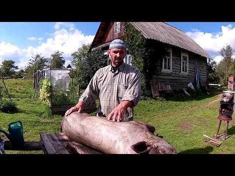 Вьетнамские свиньи. Опаливаем тушку-2 //Из города в деревню