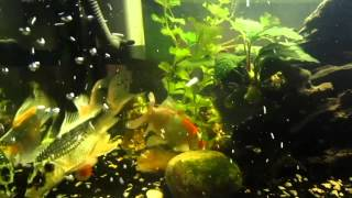 Relax Your Mind - Fish Therapy 2 (HD720p)