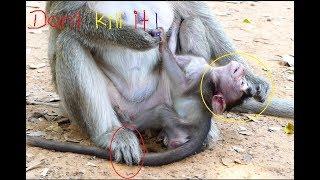 omg! It breaks heart mom monkey bite her baby nearly die, It is so hurt baby monkey, Why mom hit it?