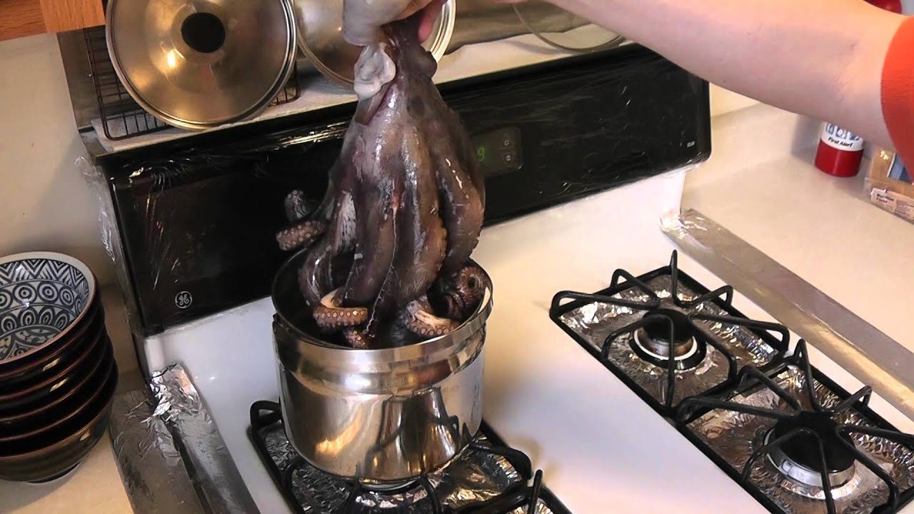 how to prepare octopus videos