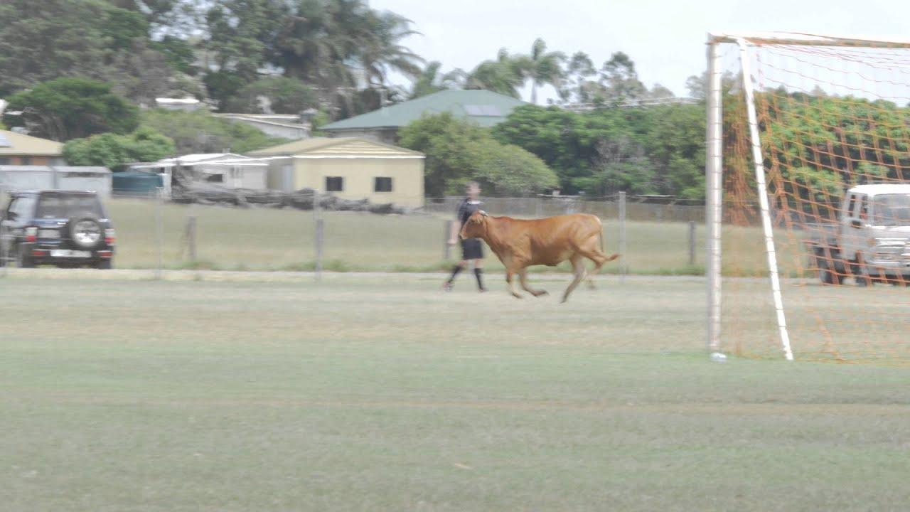 Elszabadult egy bika, focizó gyerekeket üldözött - videó