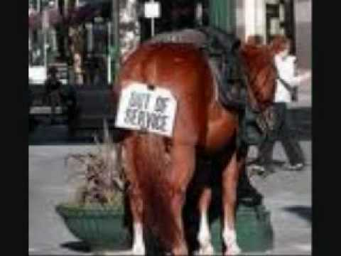 funny horse videos.wmv