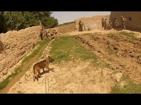 Firefight From A Dog Handlers Helmet Cam in Afghanistan