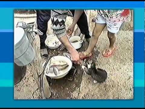 видео приколы на рыбалке русские