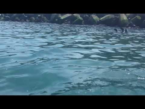 Lobos marinos de Necochea - Turismo Kayak