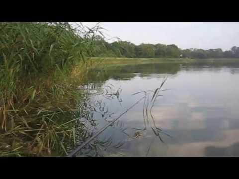 Wędkarstwo spławikowe - Spontaniczny wypad na płocie