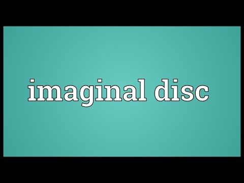 Header of Imaginal disc