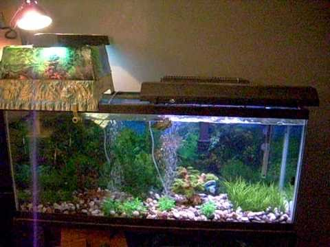 50 gallon RES Turtle Topper Tank Setup