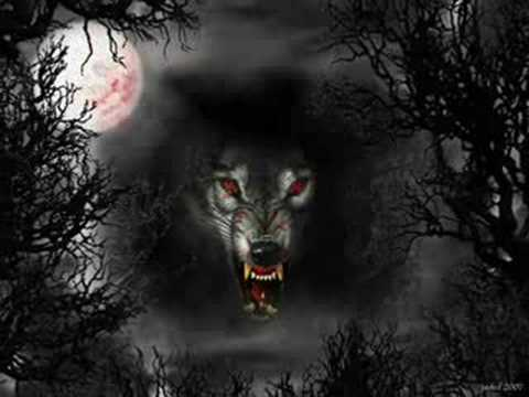 wolves love favoite animal strong protective mysterious misunderstood creatures dark wolf