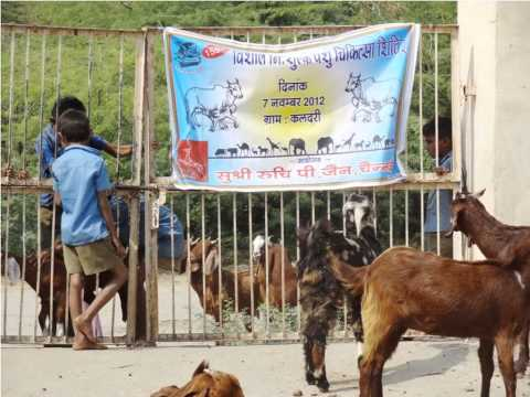animal health and vaccination camp in kaldary