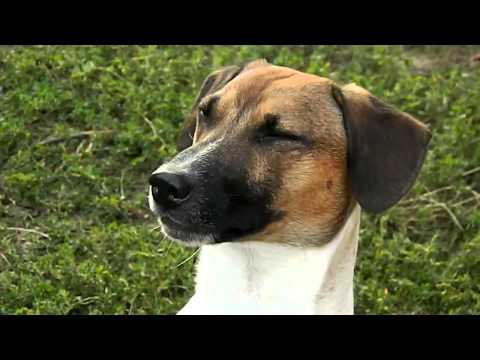 Говорящая собака говорит мама